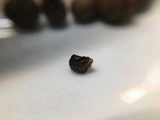 オールスパイスの種子