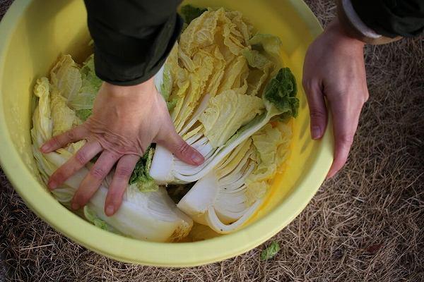 白菜塩漬け