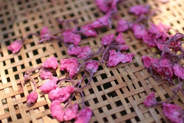 桜の塩漬け天日干し